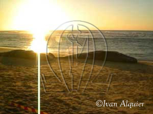 echouage-cachalots-Mimizan-plage