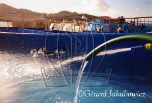 renouvellement-surface-de-l-eau